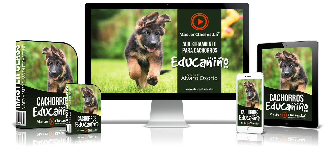 Educanino  - Seminarios Online